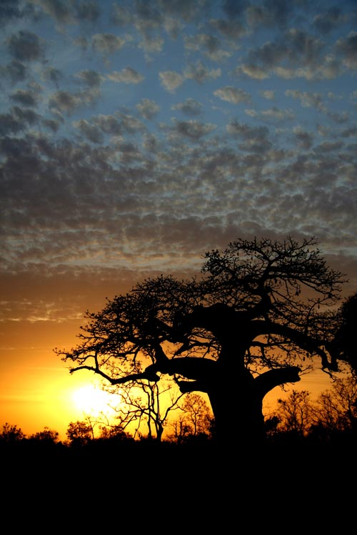 Sunset over Baobab, Pendjari