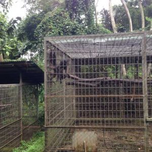 Cikananga Wildlife Center, Java