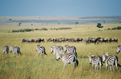 Tanzanian safari picture