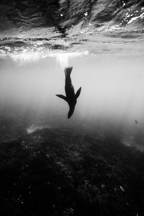 underwater photography by James Monnington