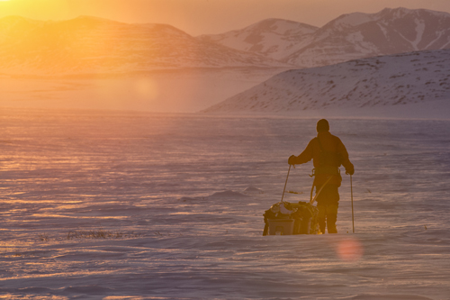 Caribou Migration Canada
