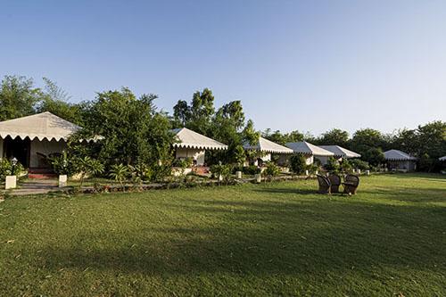 Mushroom Resort, Ranthambore