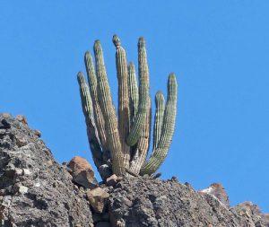 La Paz, Baja California Sur, Mexico