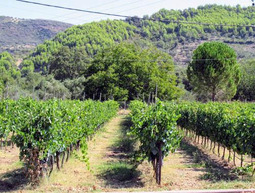 Koskina vineyard, Greece