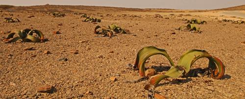 Angola desert landscape